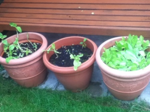 Lettuce be self-sufficient!