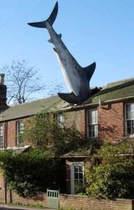 Shark House