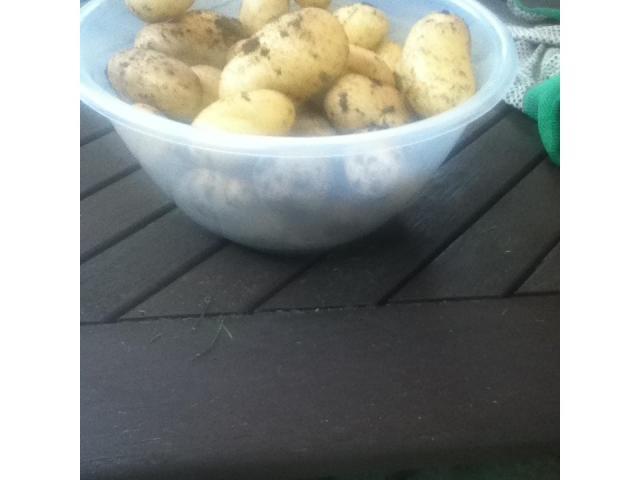 Potato bowl