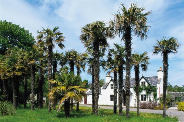 Scottish Palms