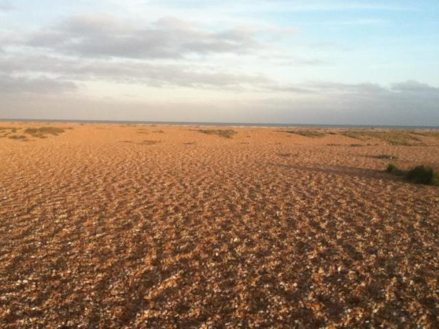Dungeness Desert