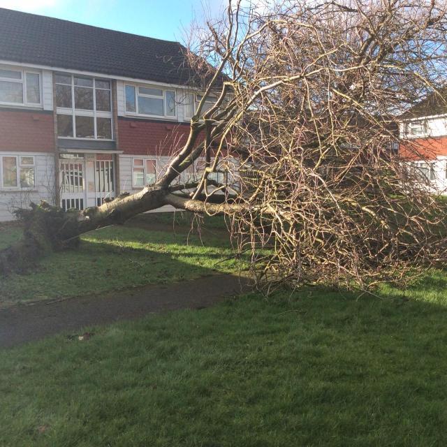 Haines Way fallen tree