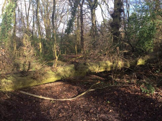 Oak on woodfloor