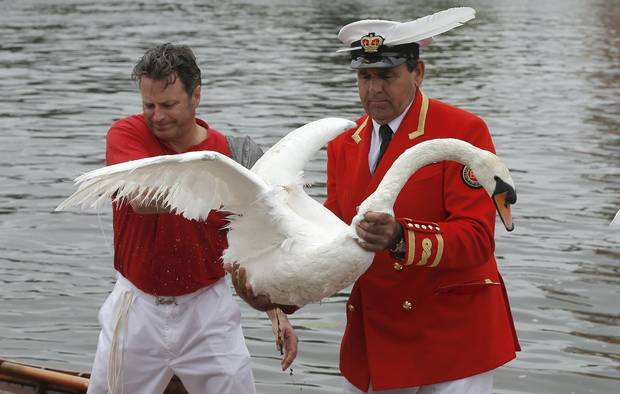 Annual Swan Count