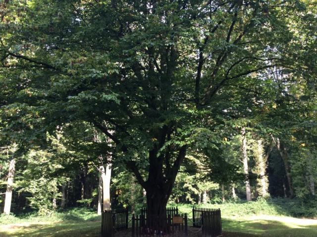 Deville Wood / Devil Wood