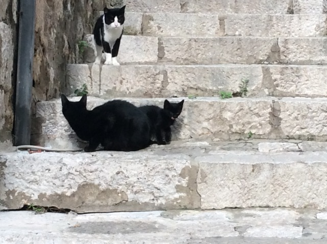 Dubrovnik is home to lots of cats and kittens