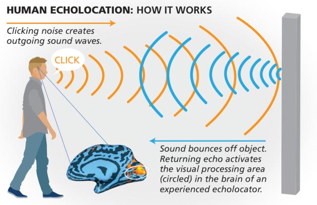 Human Sonar