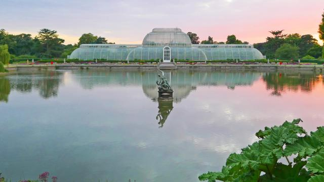 Palm House pond