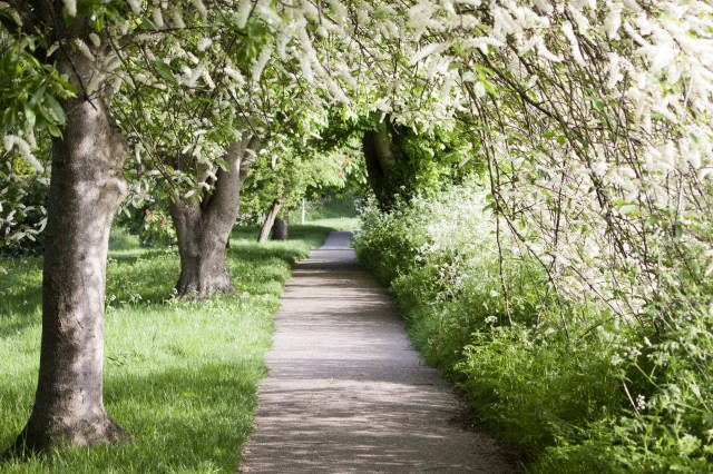 spring-tree-lined-walk