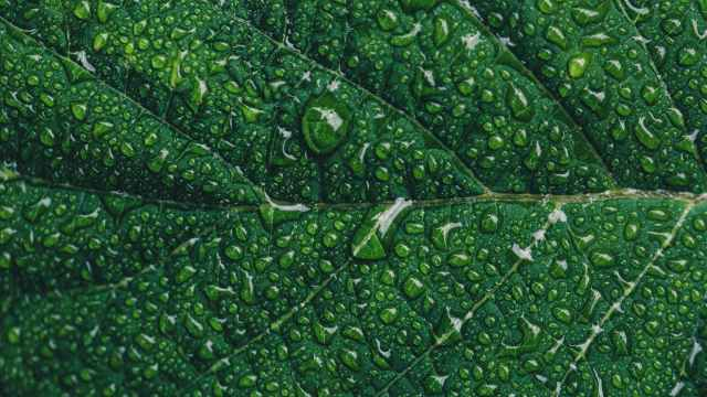 close up photography of green leaf with drops of water
