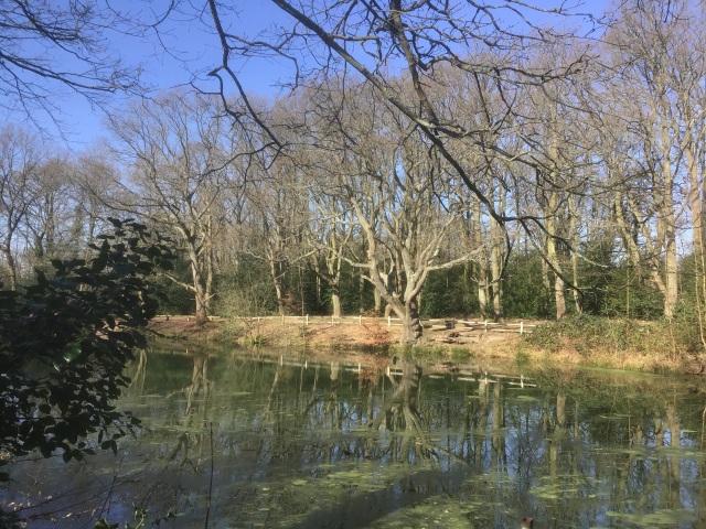 Caesar's Pond