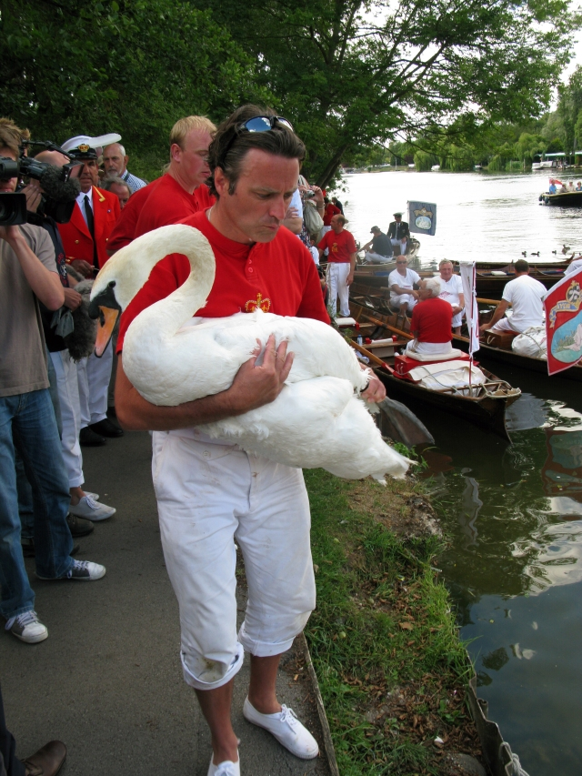 swan_upping_at_henley