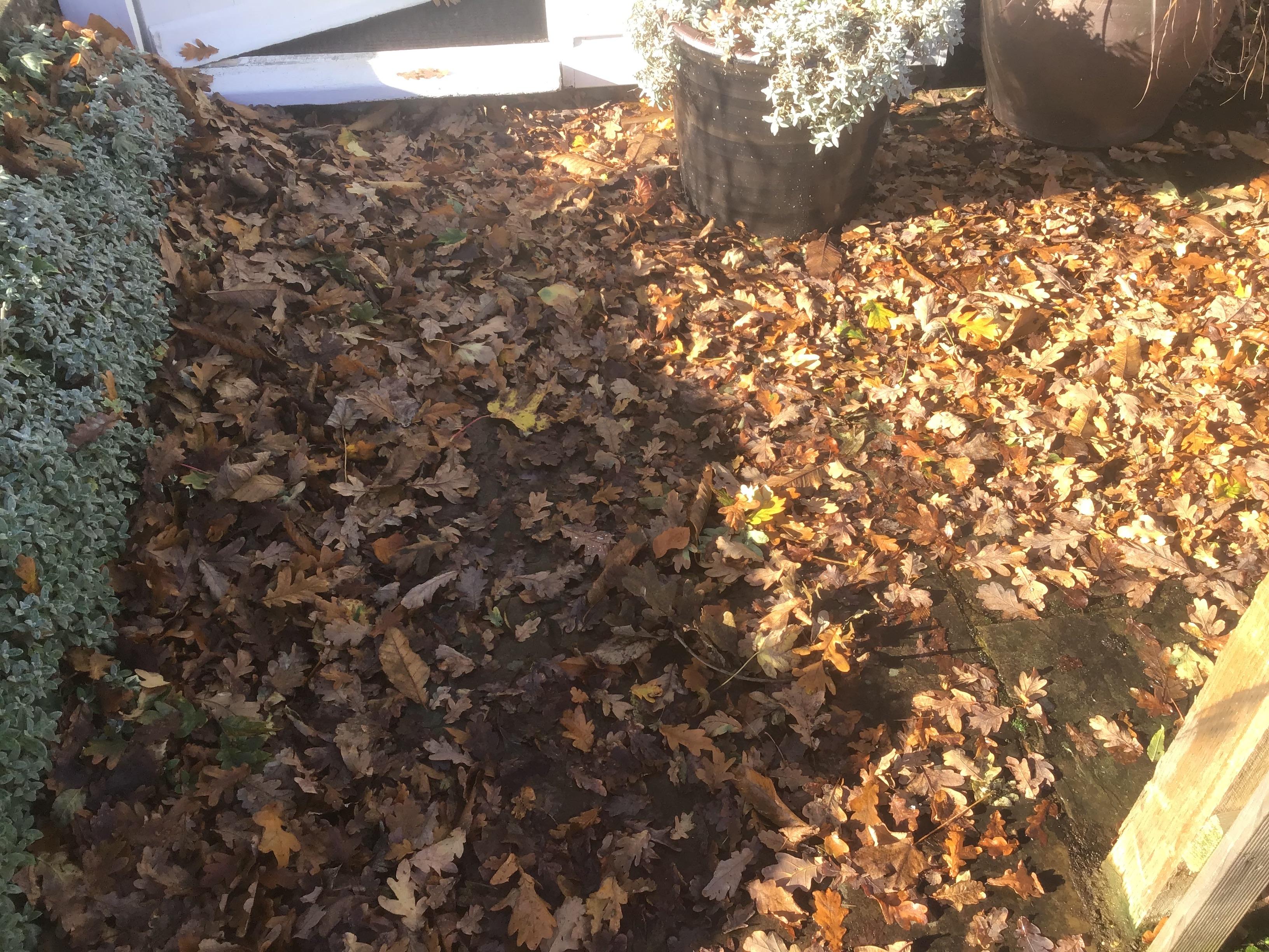 Revenge of the leafy